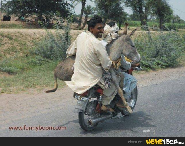 humor graficos,caricaturas,fotos curiosas - Página 8 7015_tres-burros-en-una-moto